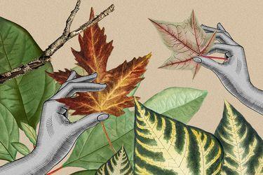 Cambio de estación: Cómo cuidar las plantas en otoño