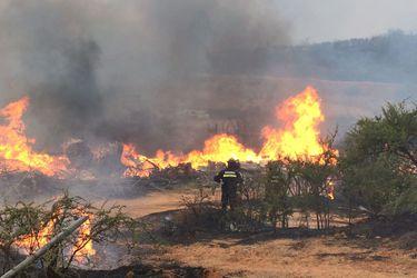 Incendios forestales: Onemi informa alerta roja en  la provincia de Marga Marga y la comuna de Punitaqui