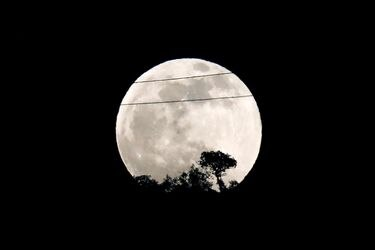 The full moon is seen rising behind a tree during the penumbral lunar eclipse in Ronda, near Malaga