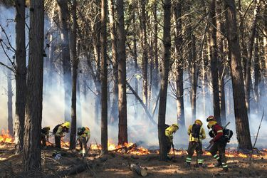 Onemi mantiene alerta roja en comuna de Valparaíso por incendio forestal en Lago Peñuelas: más de 150 hectáreas han resultado afectadas