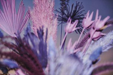 Editorial: Tener flores en casa