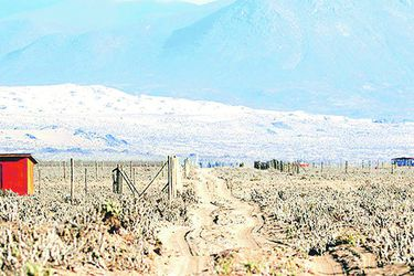 El legado que espera dejar el Tribunal Ambiental con la conciliación de Dominga
