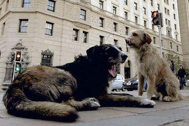 Los derechos de los animales y su eventual reconocimiento en una nueva Constitución