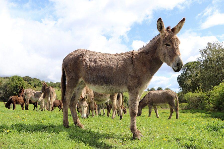 (c) EquusMilk (1)