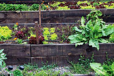 Cultivar comida es como imprimir dinero