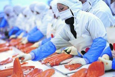 Exportaciones de salmones toman fuerza y crecen más de 30% en tercer trimestre