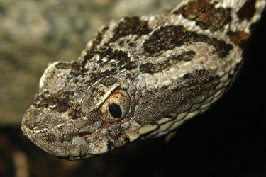 Científicos chilenos participan en investigación que descubre que veneno de las serpientes de Sudamérica podría detener metástasis del cáncer