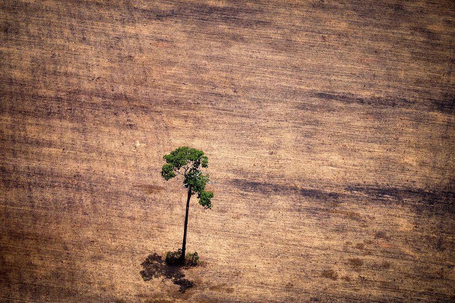 FILES-BRAZIL-AMAZON-LOGGING