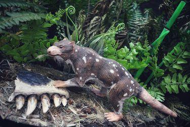 Investigadores descubren restos de mamífero de hace 74 millones de años en la Patagonia Chilena