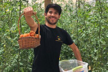 Emprendedor cultiva tomates cherry en el desierto más árido del mundo