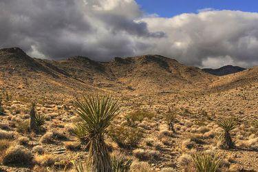 La consagración del desierto