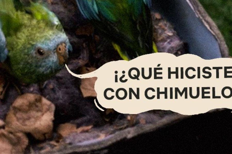 chimuelo