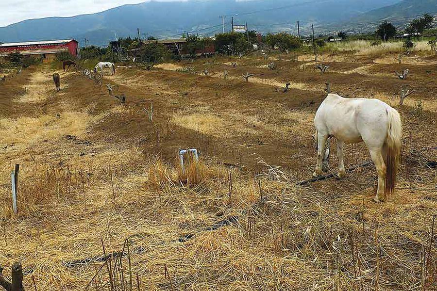 Campo en la comuna de Petorca, en la Región de Valparaíso, en 2015.  Foto: AgenciaUno