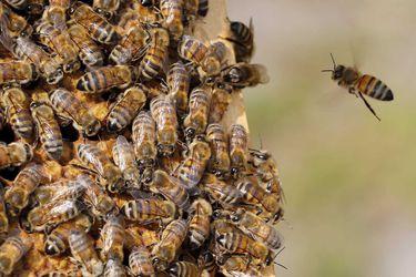 La pareja de apicultores que busca proteger a las abejas de la deforestación por la coca