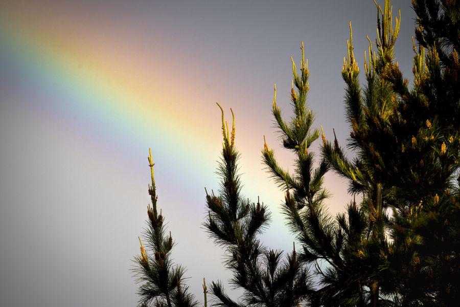 El 90,3% del patrimonio forestal de CMPC se encuentra certificado con manejo forestal sostenible, según informa su Reporte Integrado 2019.