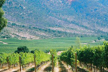 Reapertura de China dispara ventas de vino a ese país y eleva su valor