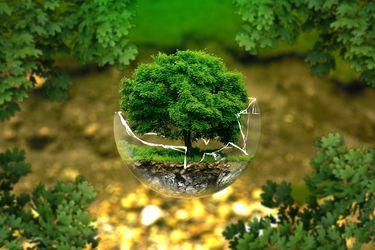 Los proyectos ambientales pueden generar más empleo y crecimiento
