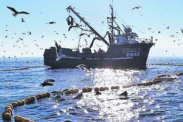 Sernapesca descarta riesgos en otros envíos, tras bloqueo chino a pesquera nacional