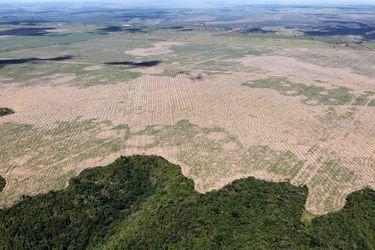 Impacto de la deforestación: estudio revela consecuencias medioambientales de programas de desarrollo rural