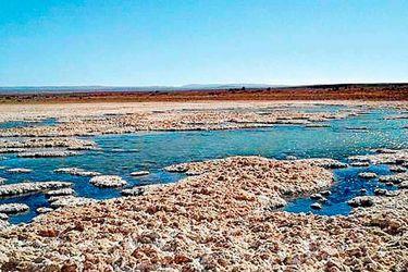 Tribunal acoge demanda del CDE contra Minera Escondida por daño ambiental en salar