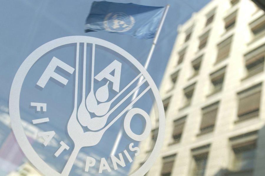 fao-modif-1100x618