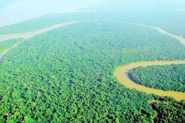 La Amazonía podría convertirse en una árida sabana en 50 años