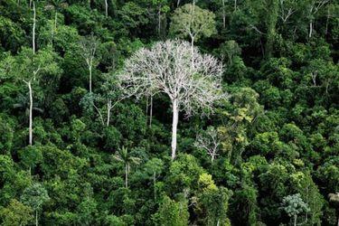 Invertir en la naturaleza: clave para la recuperación pos Covid-19