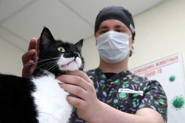 Zoonosis reversa, humanos infectando a sus mascotas: Estudio de la U. de Chile detecta en el país casos de gatos con coronavirus que fueron contagiados por sus dueños