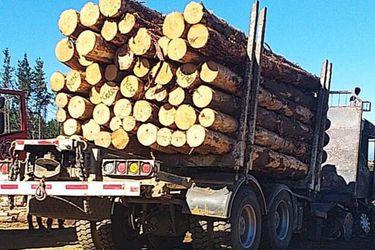 Macrozona Sur: detienen a cinco personas e incautan camiones con madera robada en patrullaje mixto de Fuerzas Armadas y Carabineros en Traiguén