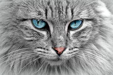 ¿La gata o yo? Peleas en Pandemia (2ª parte)