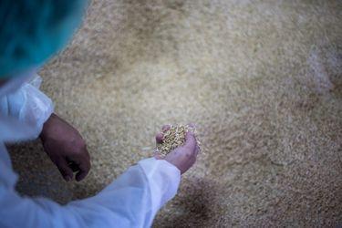 ¿Interiores hechos de cáscara de arroz? Seat ya trabaja en ellos