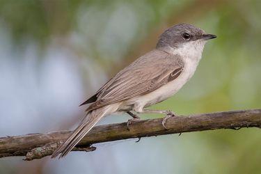 Lo que debes saber (y tener) para comenzar en el avistamiento de aves
