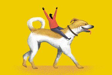 Cómo enseñarle a tu perro hacer sus necesidades fuera de casa