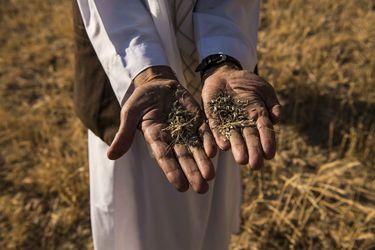 Crece el riesgo de escasez de alimentos debido al cambio climático
