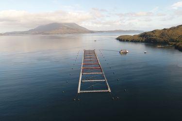 La mortalidad de salmones por efecto de algas nocivas sigue aumentando y ya suman más de 4.500 toneladas