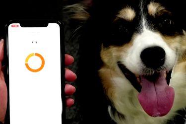 Startup crea tecnología capaz de interpretar las emociones de una mascota
