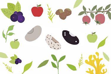 Nuestras sabrosas raíces...Tallos, frutos, legumbres y un largo etc