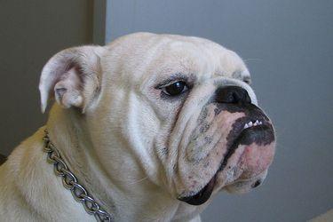 Mi perro y yo en la interminable soledad de la pandemia (2ª parte): Nostalgia Gastronómica