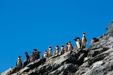 La biodiversidad en peligro: científicos mapean los conflictos socioambientales
