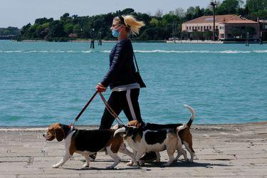 Menos paseos, ansiedad y el peligro de una sobredosis de cloro: el impacto de la cuarentena en las mascotas