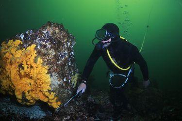 Lanzan libro sobre el patrimonio natural y cultural del archipiélago Humboldt