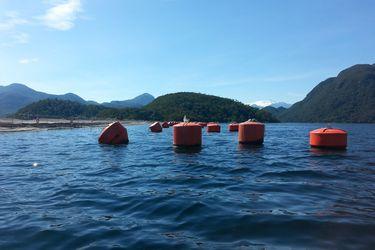 Mayor productora mundial de salmones arriesga revocación de permiso ambiental para centro de cultivo ubicado en Aysén