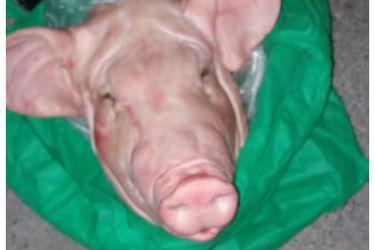 Una cabeza de chancho en una bolsa: Dueña de tienda en Vitacura denuncia amenaza de clubes nocturnos