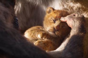 rey leon