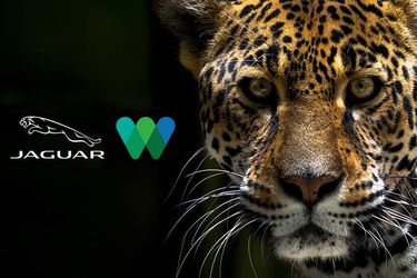 Jaguar se compromete en una cruzada para salvar a los jaguares en peligro de extinción