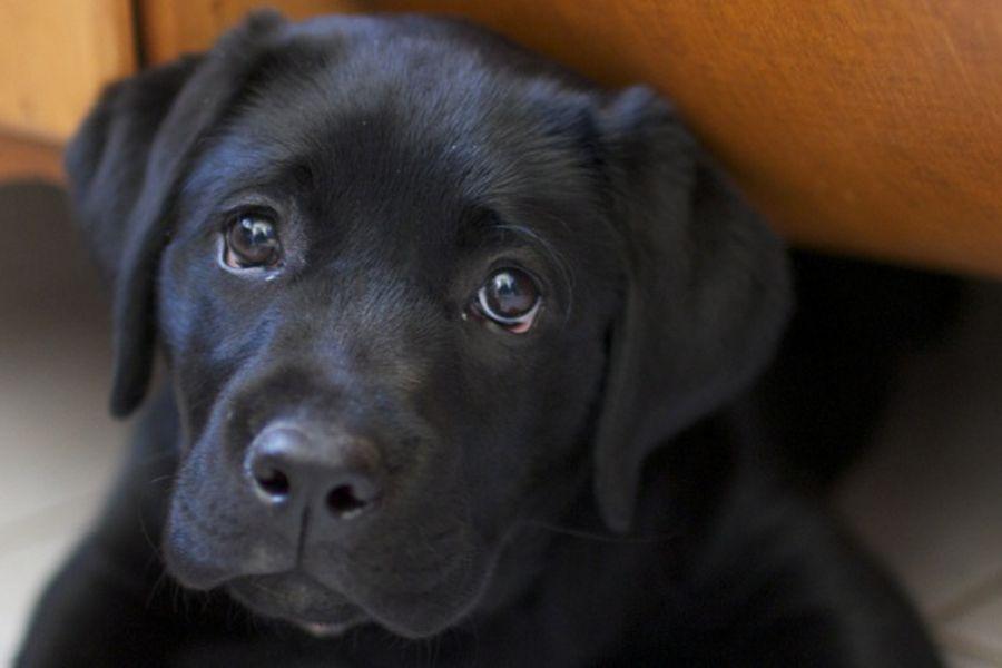 puppie
