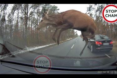 Esta es la mejor demostración de por qué debes conducir siempre atento a las condiciones del tránsito