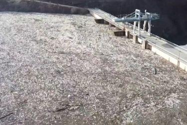 Océano de basura amenaza la represa del Lago Potpecko en Serbia