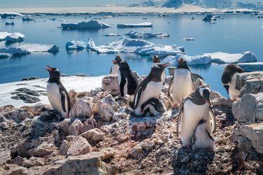 Descubren plástico y celulosa en la dieta de los pingüinos de la Antártica
