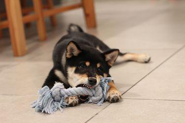 Los mejores juguetes indoor para perros (según sus dueñas)